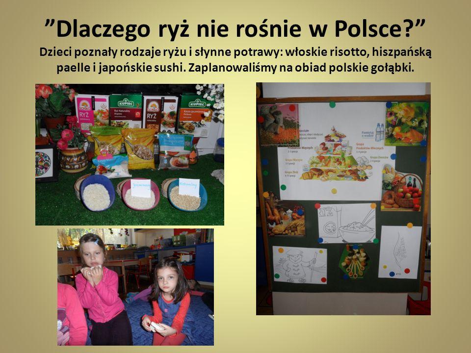 Dlaczego ryż nie rośnie w Polsce