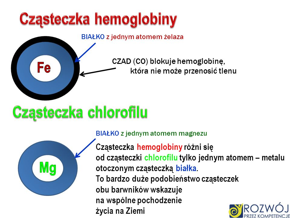 Cząsteczka hemoglobiny Cząsteczka chlorofilu