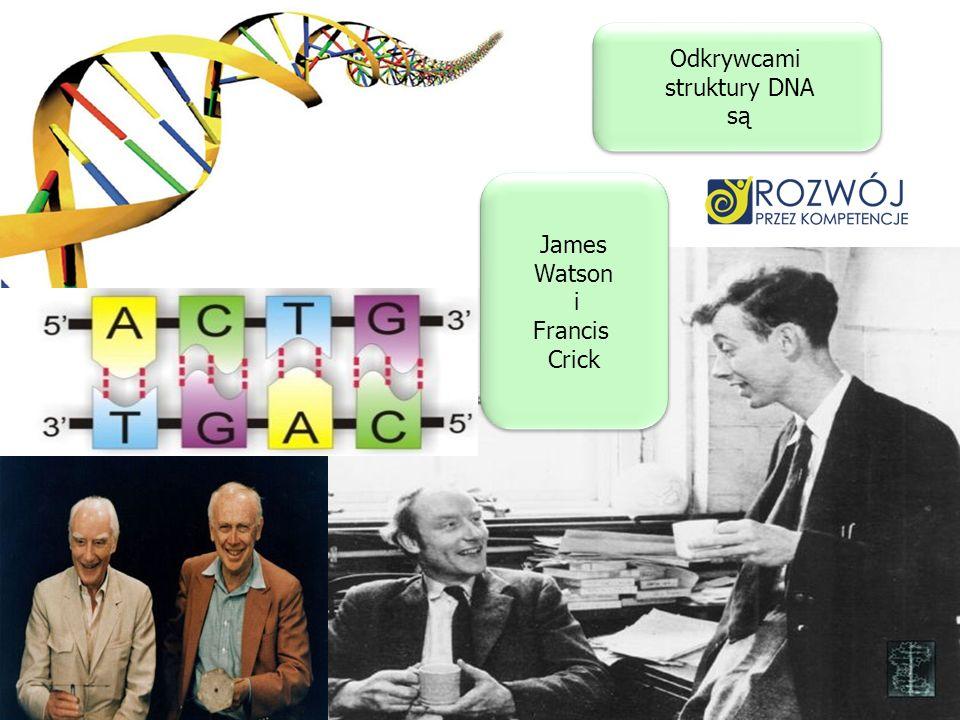 Odkrywcami struktury DNA są James Watson i Francis Crick