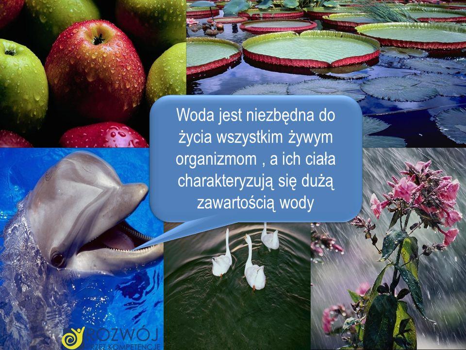 Woda jest niezbędna do życia wszystkim żywym organizmom , a ich ciała charakteryzują się dużą zawartością wody