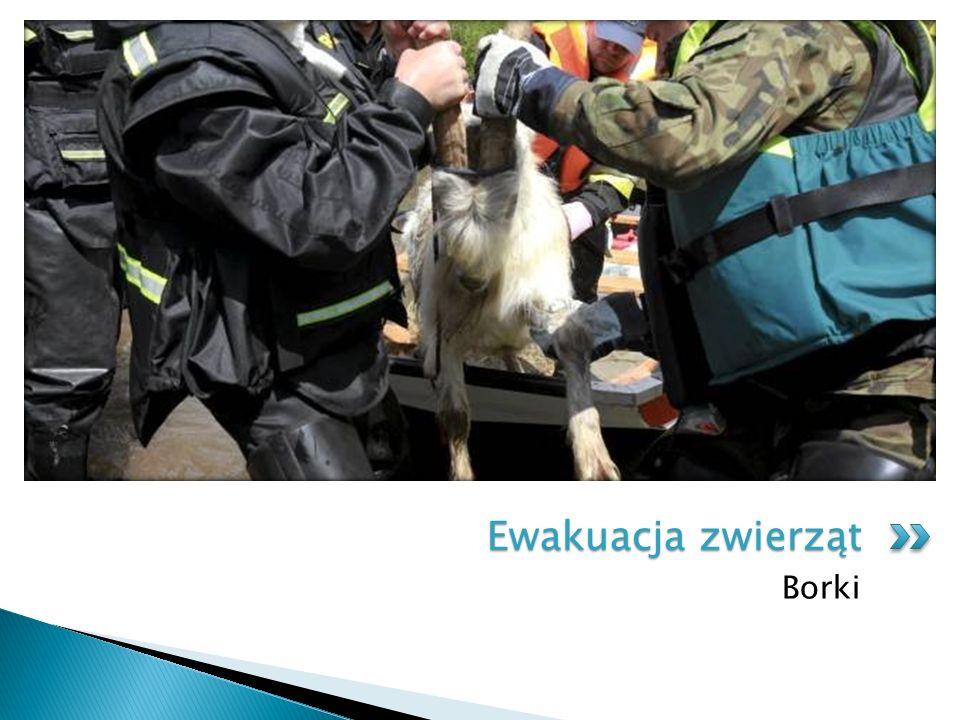 Ewakuacja zwierząt Borki
