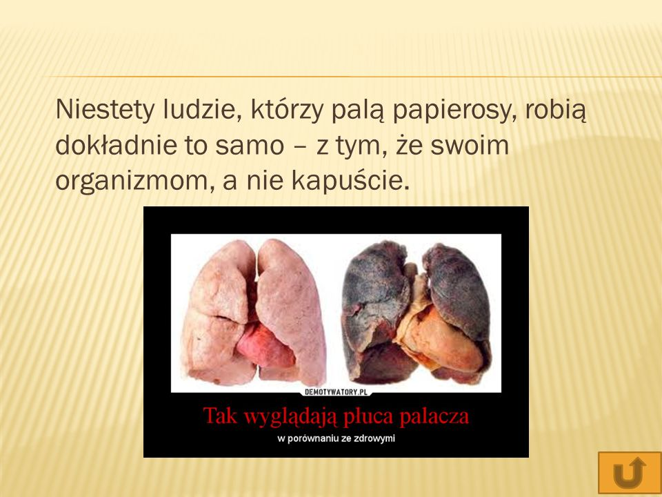 Niestety ludzie, którzy palą papierosy, robią dokładnie to samo – z tym, że swoim organizmom, a nie kapuście.