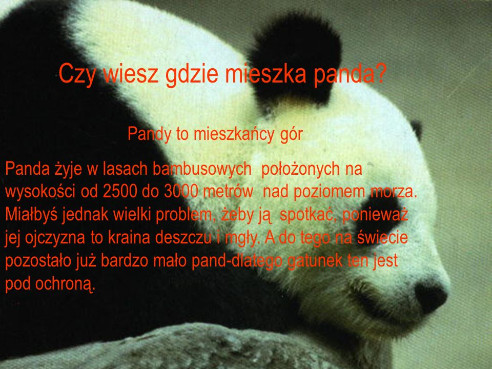 Pandy to mieszkańcy gór