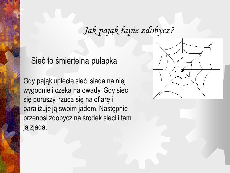 Jak pająk łapie zdobycz