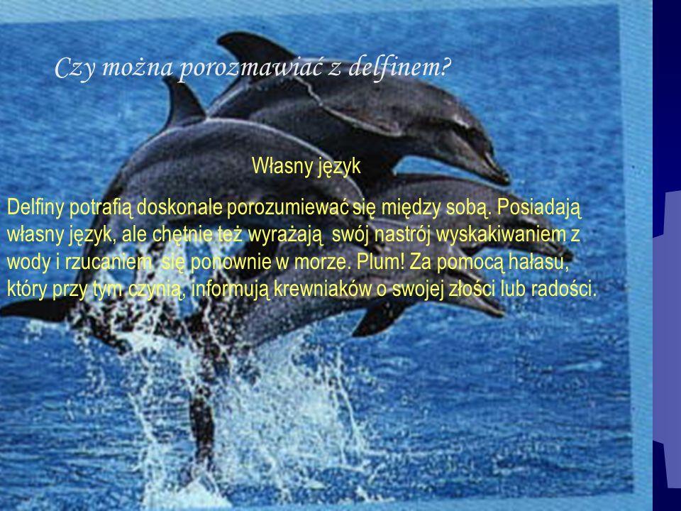 Czy można porozmawiać z delfinem