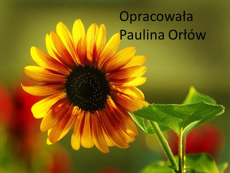 Opracowała Paulina Orłów