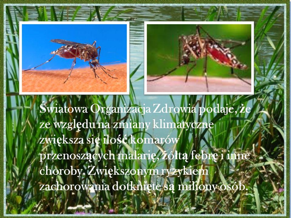 Światowa Organizacja Zdrowia podaje, że ze względu na zmiany klimatyczne zwiększa się ilość komarów przenoszących malarię, żółtą febrę i inne choroby.