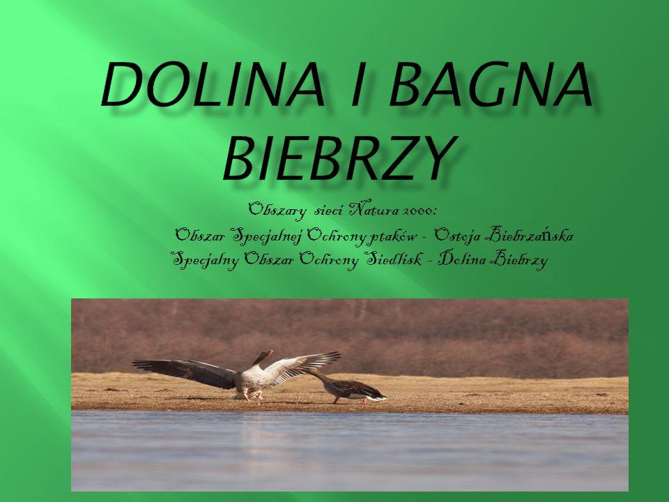 DOLINA I BAGNA BiebrzY Obszary sieci Natura 2000: