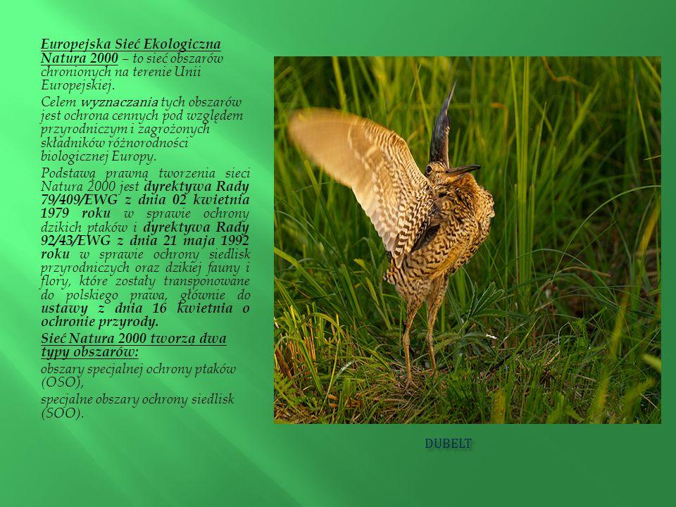 Europejska Sieć Ekologiczna Natura 2000 – to sieć obszarów chronionych na terenie Unii Europejskiej.