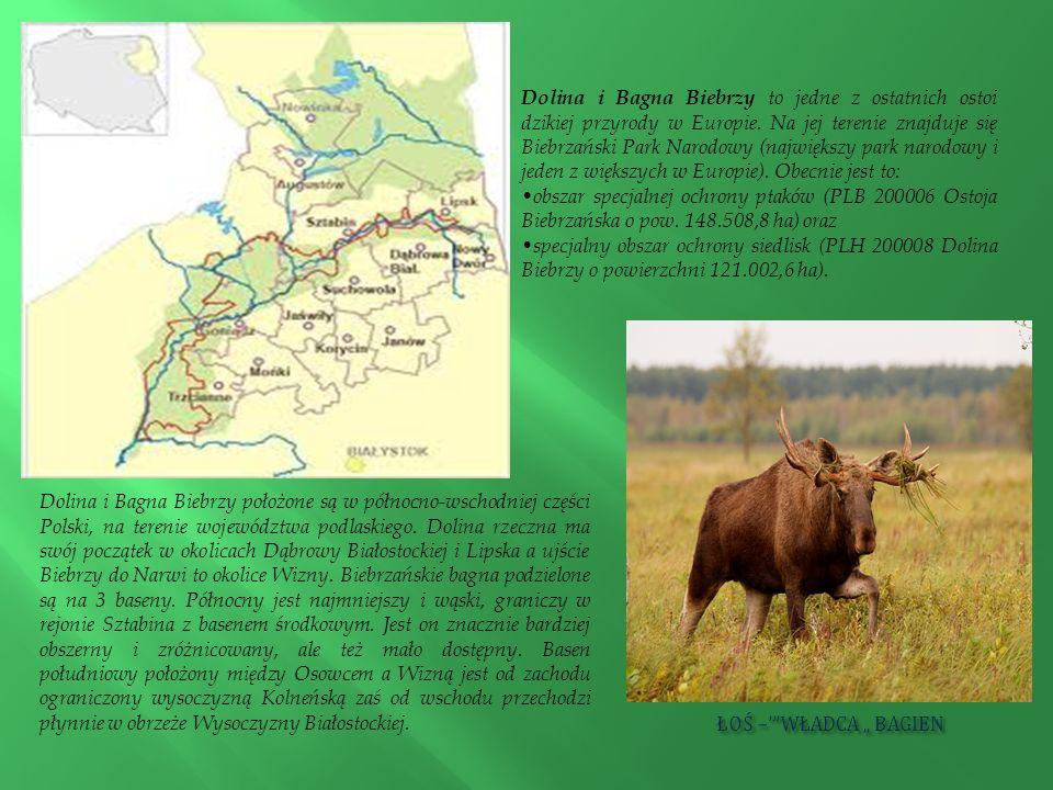 Dolina i Bagna Biebrzy to jedne z ostatnich ostoi dzikiej przyrody w Europie. Na jej terenie znajduje się Biebrzański Park Narodowy (największy park narodowy i jeden z większych w Europie). Obecnie jest to: