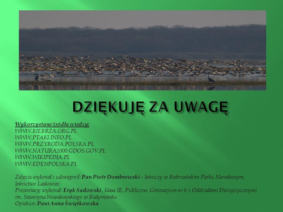 DZIĘKUJĘ ZA UWAGĘ Wykorzystane źródła wiedzy: WWW.BIEBRZA.ORG.PL