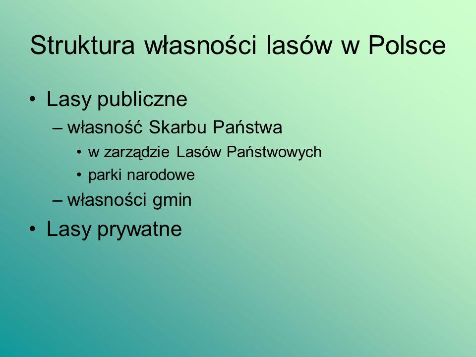 Struktura własności lasów w Polsce