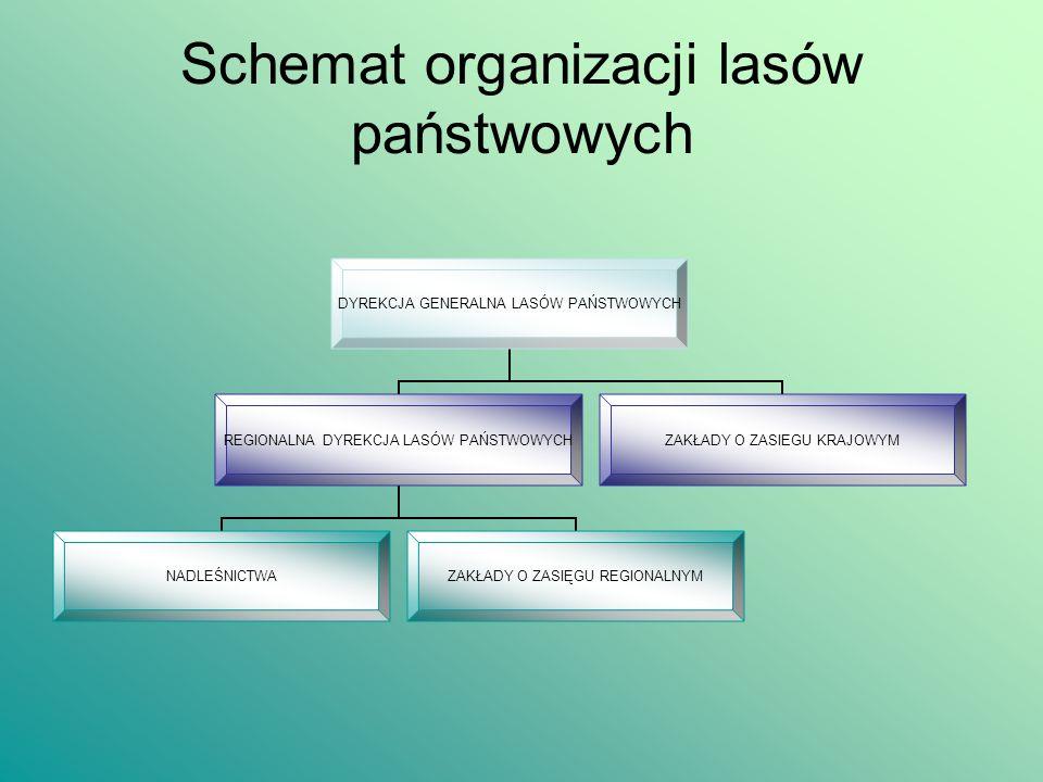 Schemat organizacji lasów państwowych