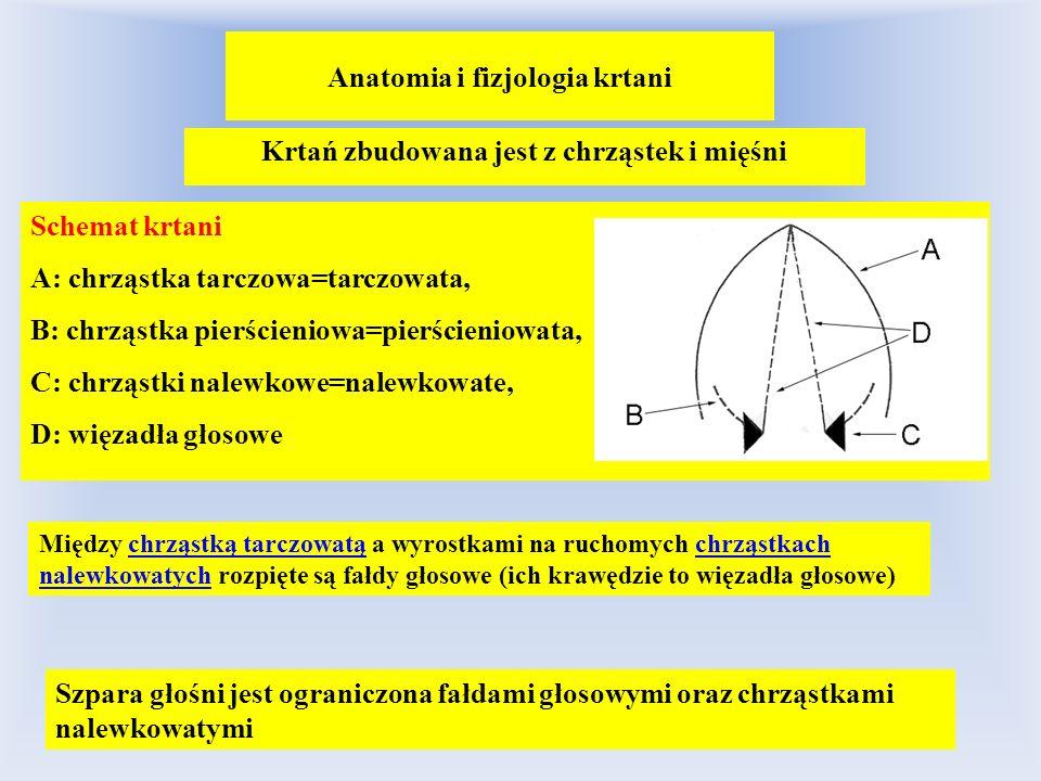 Anatomia i fizjologia krtani