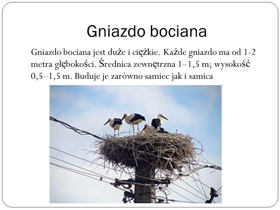 Gniazdo bociana