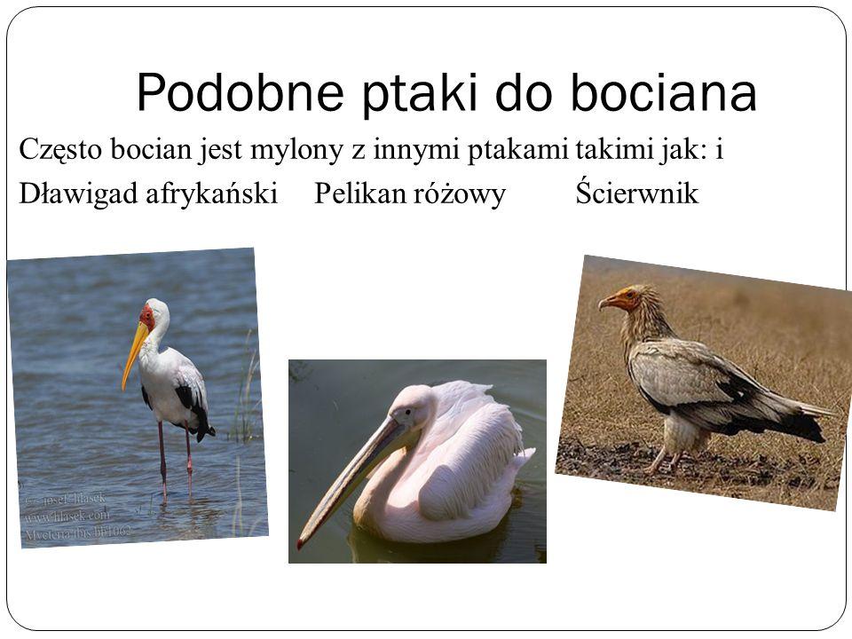 Podobne ptaki do bociana