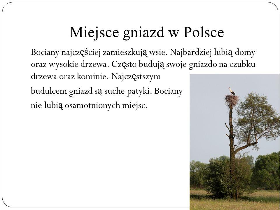 Miejsce gniazd w Polsce