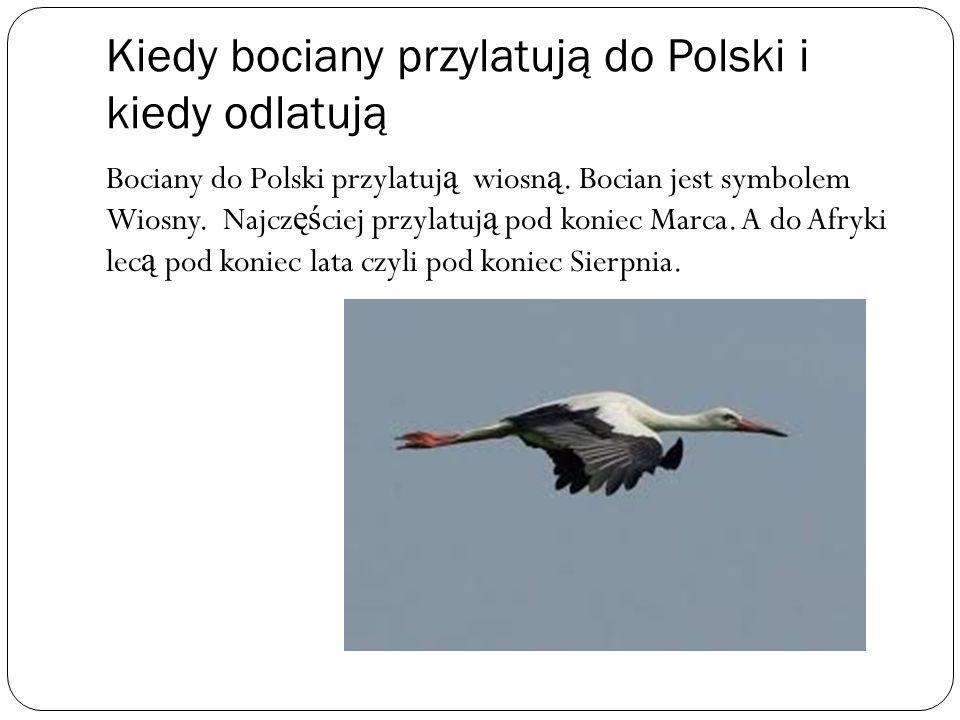 Kiedy bociany przylatują do Polski i kiedy odlatują