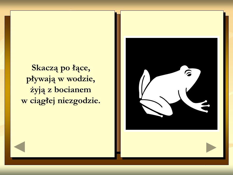 Skaczą po łące, pływają w wodzie, żyją z bocianem w ciągłej niezgodzie.