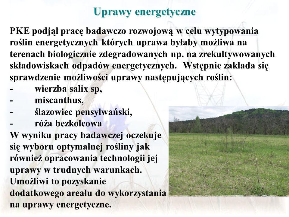 Uprawy energetyczne