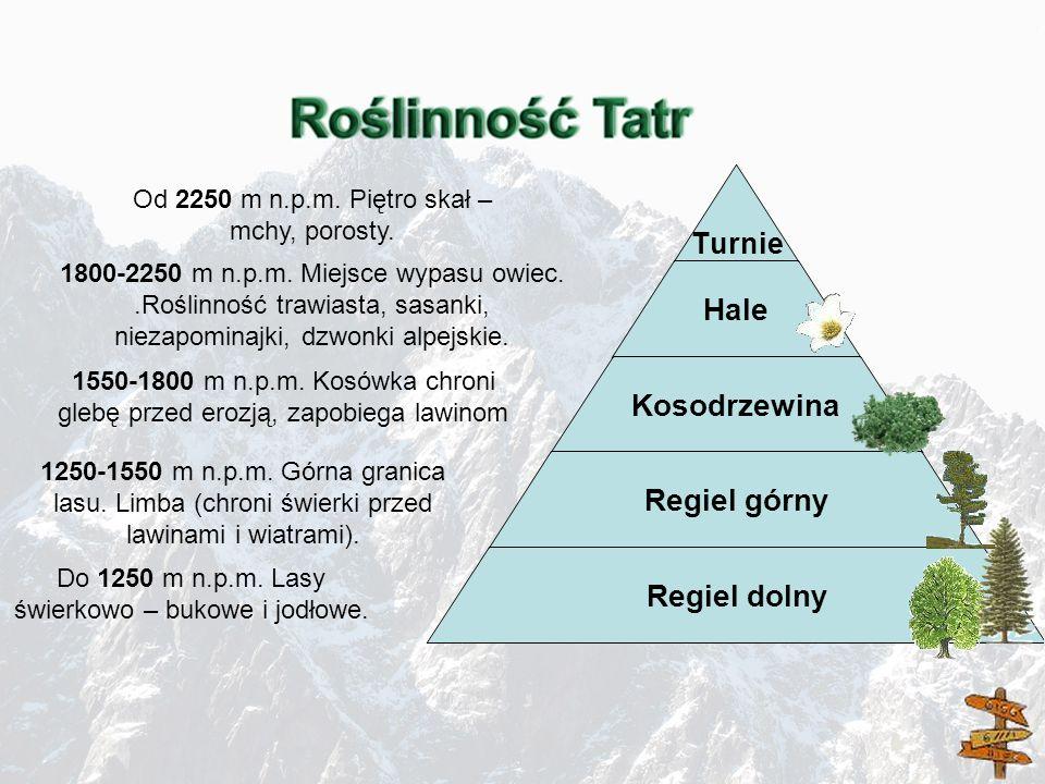 Od 2250 m n.p.m. Piętro skał – mchy, porosty.