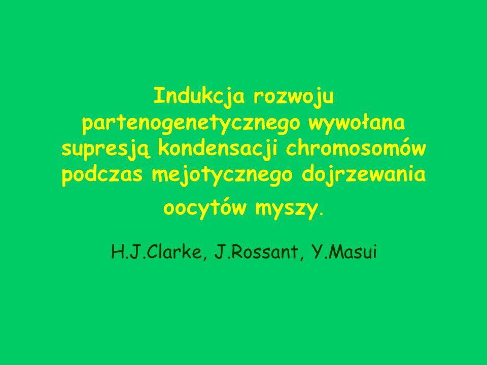 H.J.Clarke, J.Rossant, Y.Masui