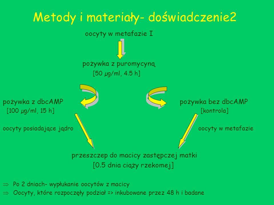 Metody i materiały- doświadczenie2