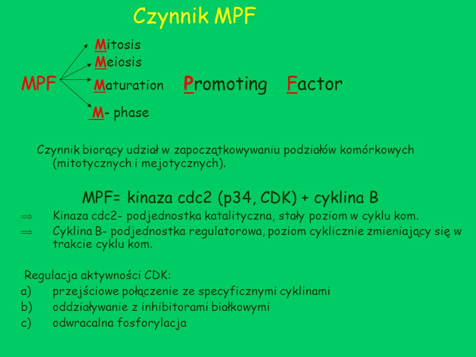 Czynnik MPF MPF Maturation Promoting Factor
