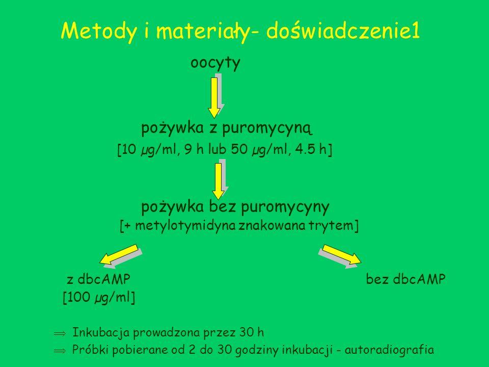 Metody i materiały- doświadczenie1