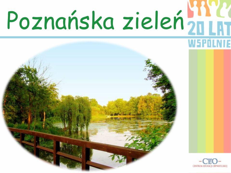 Poznańska zieleń