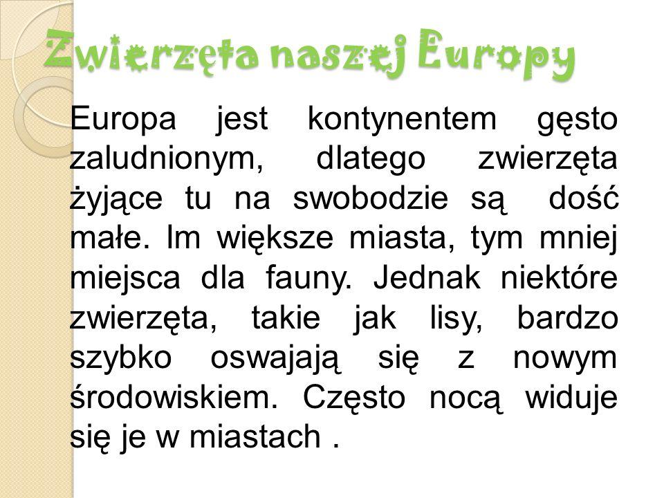 Zwierzęta naszej Europy