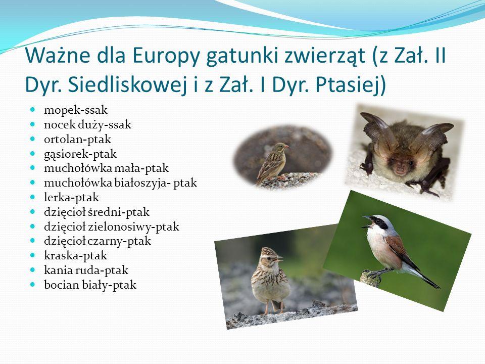 Ważne dla Europy gatunki zwierząt (z Zał. II Dyr. Siedliskowej i z Zał