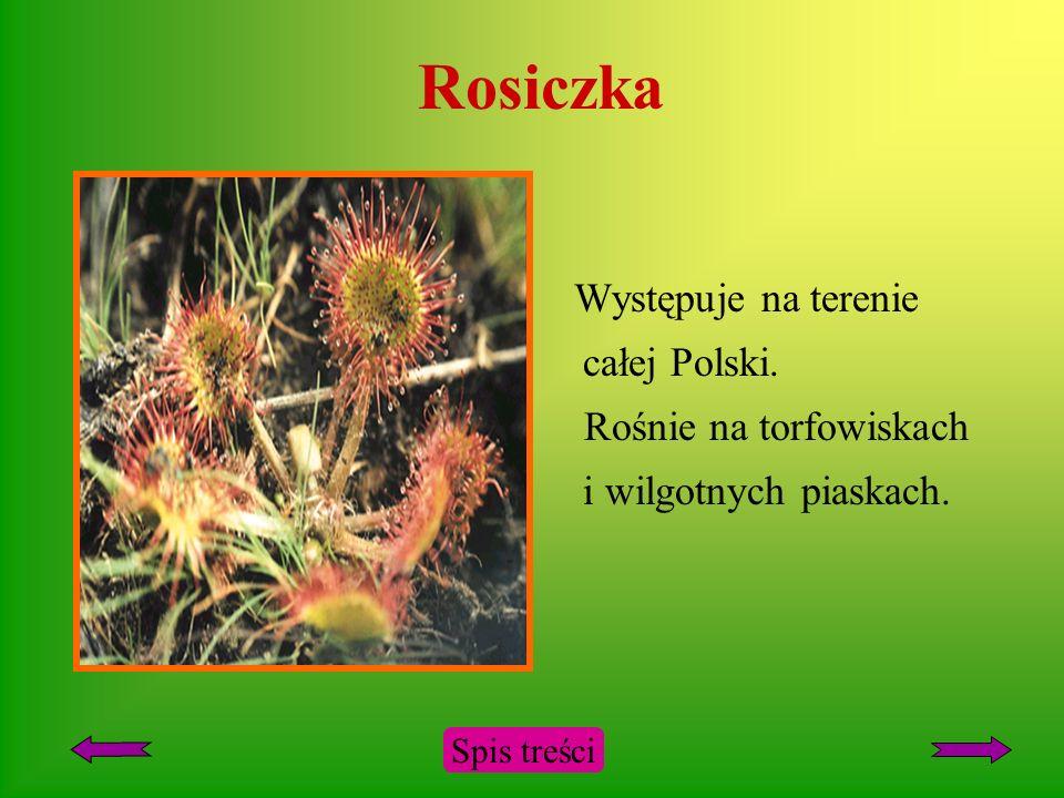 Rosiczka Występuje na terenie całej Polski.
