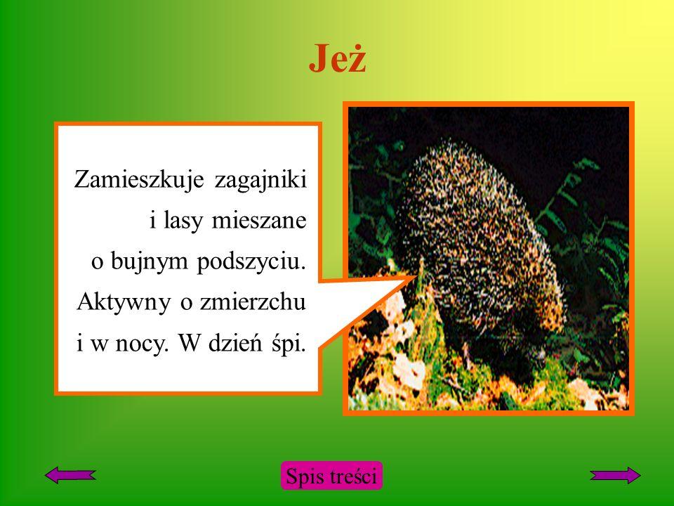 Jeż Zamieszkuje zagajniki i lasy mieszane o bujnym podszyciu. Aktywny o zmierzchu i w nocy. W dzień śpi.