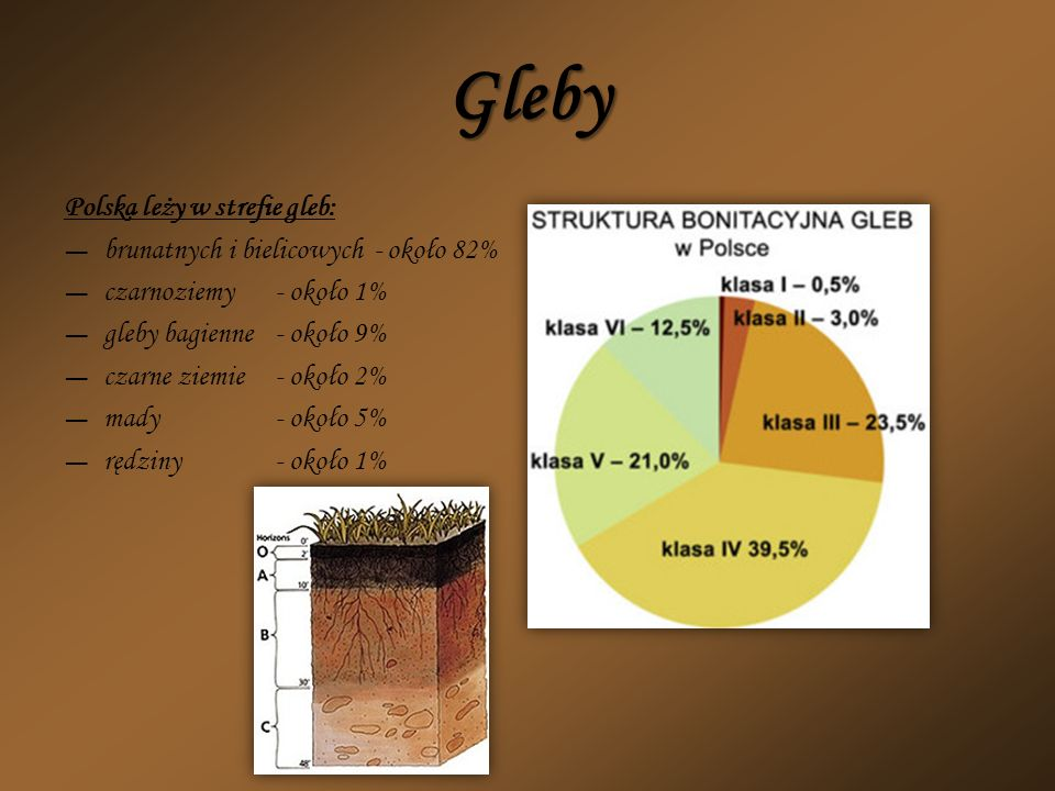 Gleby Polska leży w strefie gleb: brunatnych i bielicowych - około 82%