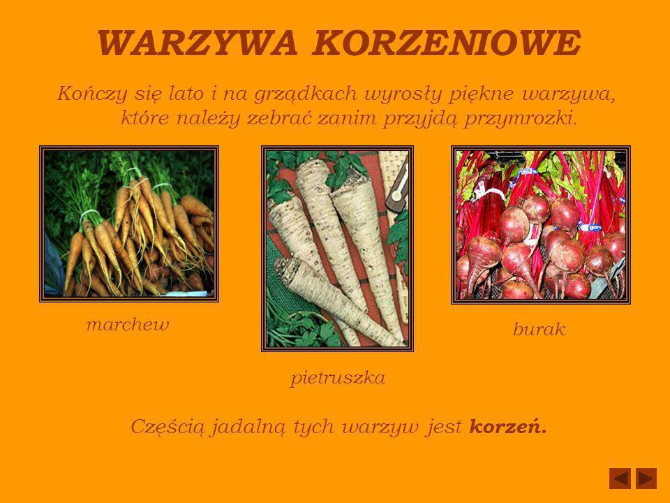 Częścią jadalną tych warzyw jest korzeń.