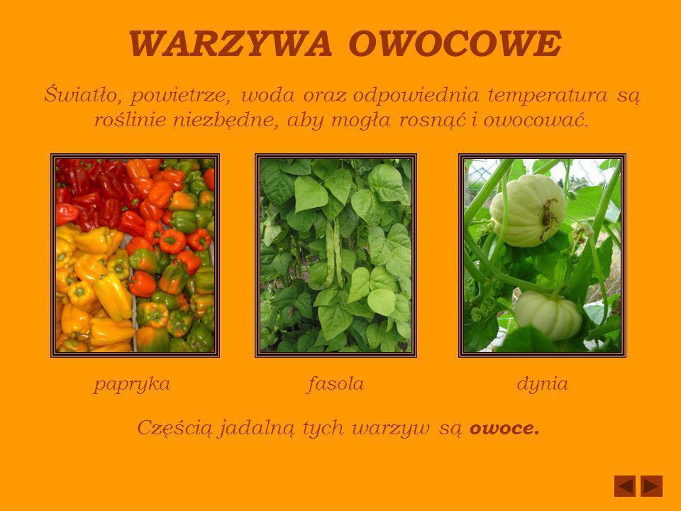 Częścią jadalną tych warzyw są owoce.