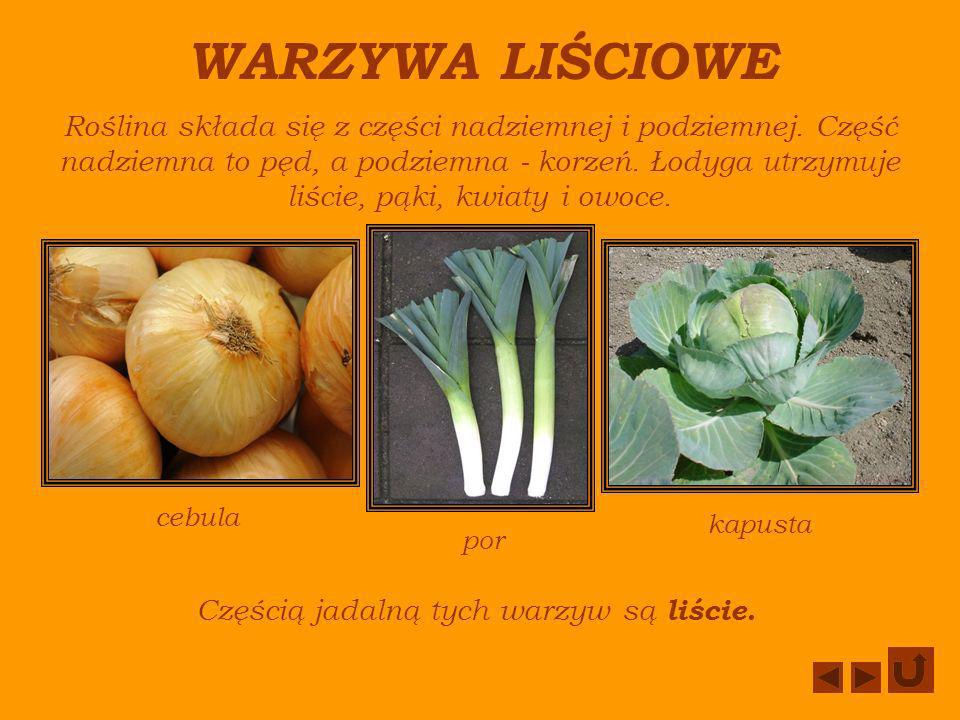 Częścią jadalną tych warzyw są liście.
