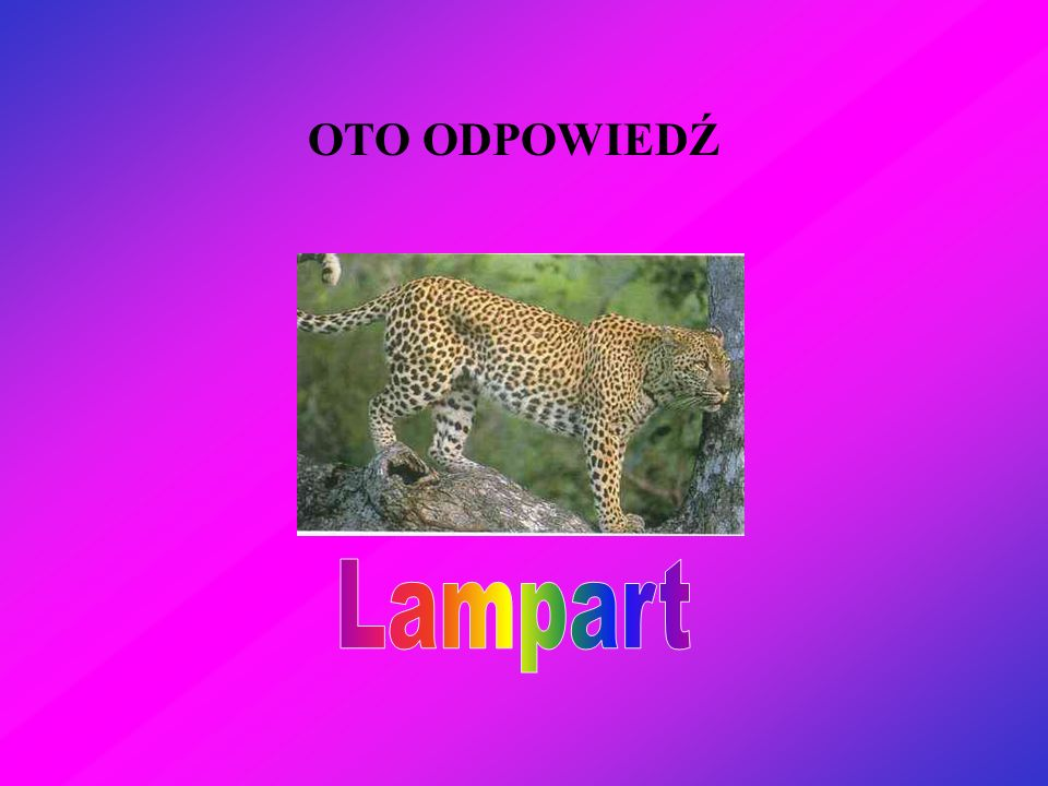 OTO ODPOWIEDŹ Lampart