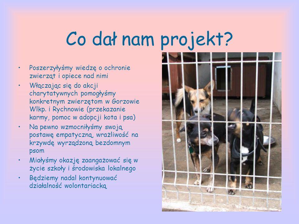 Co dał nam projekt Poszerzyłyśmy wiedzę o ochronie zwierząt i opiece nad nimi.