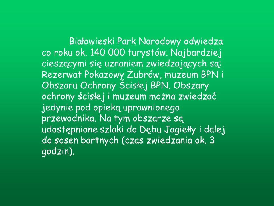 Białowieski Park Narodowy odwiedza co roku ok. 140 000 turystów
