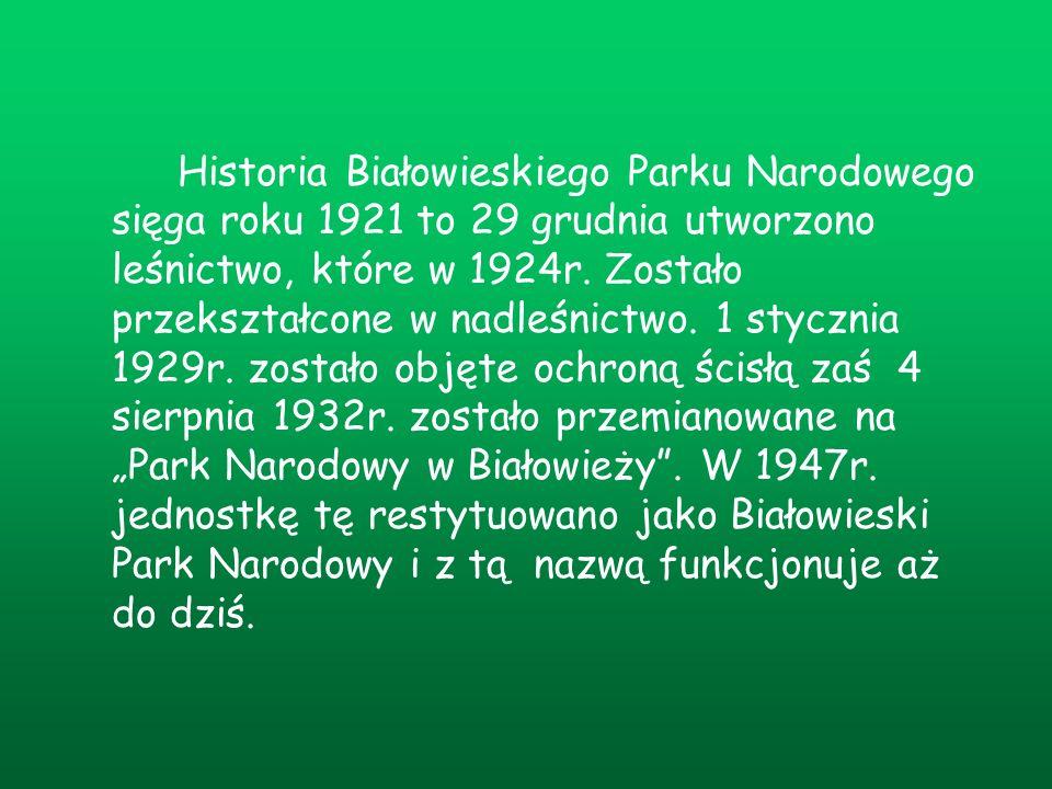 Historia Białowieskiego Parku Narodowego sięga roku 1921 to 29 grudnia utworzono leśnictwo, które w 1924r.