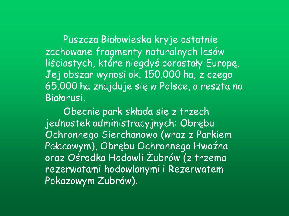 Puszcza Białowieska kryje ostatnie zachowane fragmenty naturalnych lasów liściastych, które niegdyś porastały Europę. Jej obszar wynosi ok. 150.000 ha, z czego 65.000 ha znajduje się w Polsce, a reszta na Białorusi.