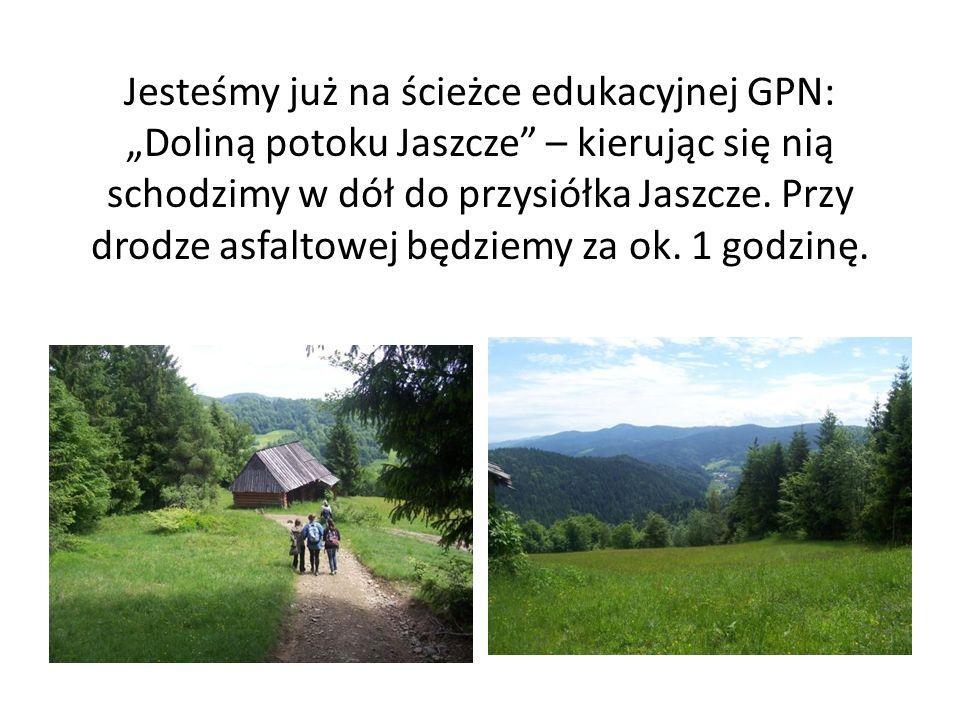 """Jesteśmy już na ścieżce edukacyjnej GPN: """"Doliną potoku Jaszcze – kierując się nią schodzimy w dół do przysiółka Jaszcze."""