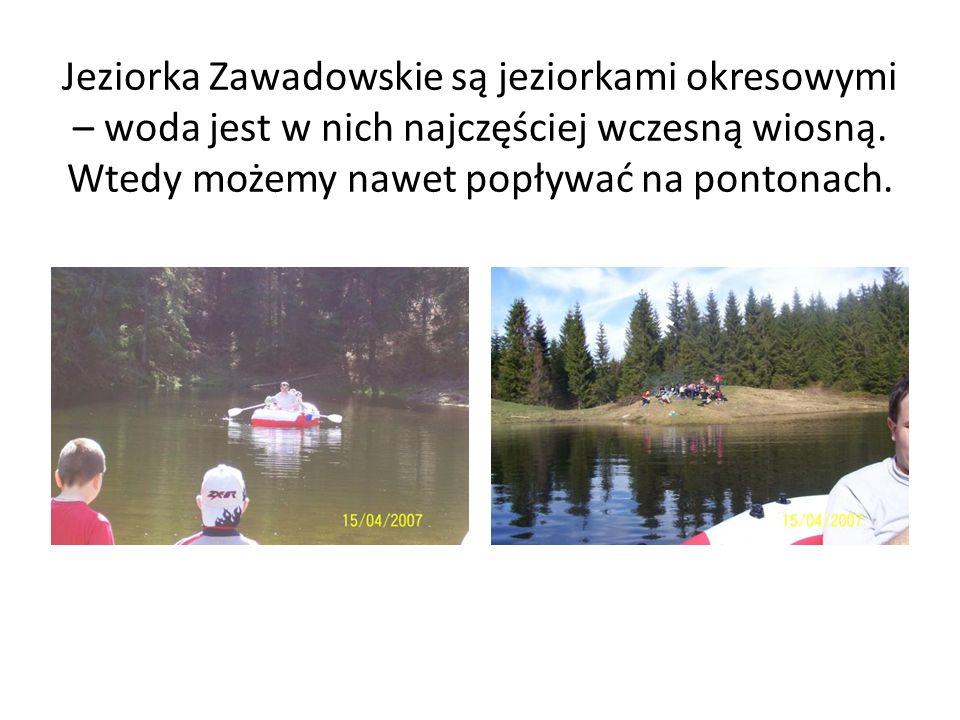Jeziorka Zawadowskie są jeziorkami okresowymi – woda jest w nich najczęściej wczesną wiosną.
