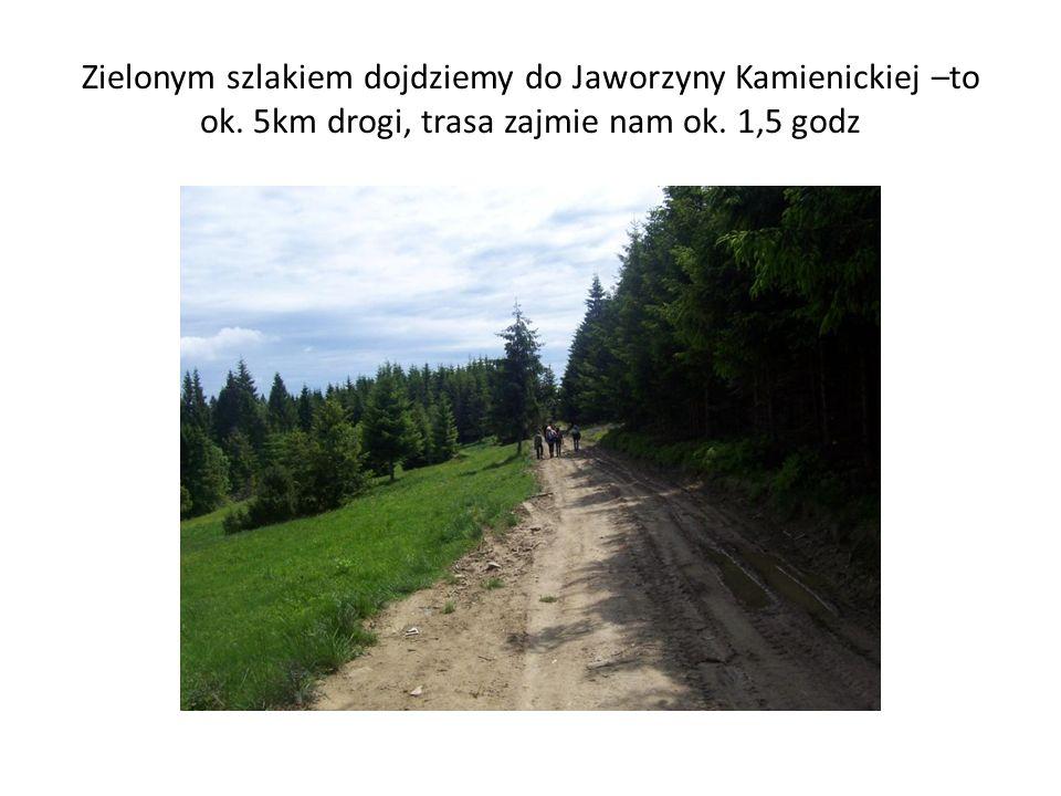 Zielonym szlakiem dojdziemy do Jaworzyny Kamienickiej –to ok