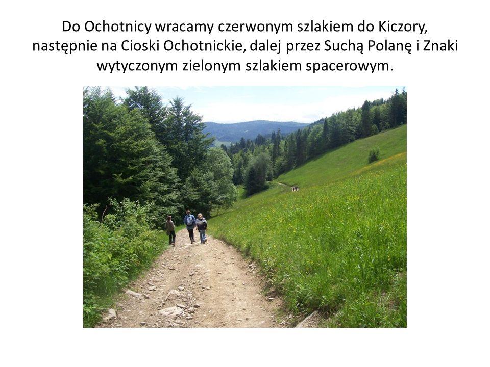 Do Ochotnicy wracamy czerwonym szlakiem do Kiczory, następnie na Cioski Ochotnickie, dalej przez Suchą Polanę i Znaki wytyczonym zielonym szlakiem spacerowym.