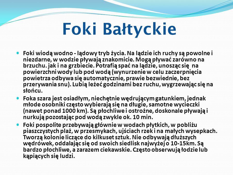 Foki Bałtyckie