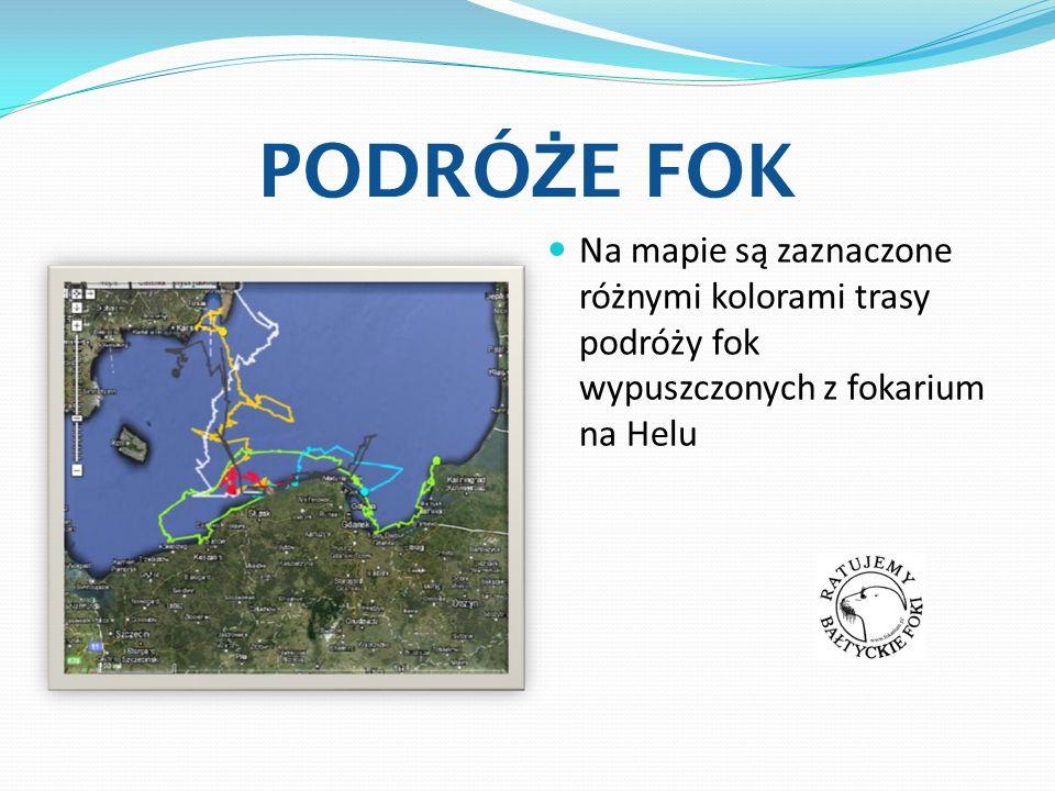 PODRÓŻE FOK Na mapie są zaznaczone różnymi kolorami trasy podróży fok wypuszczonych z fokarium na Helu.