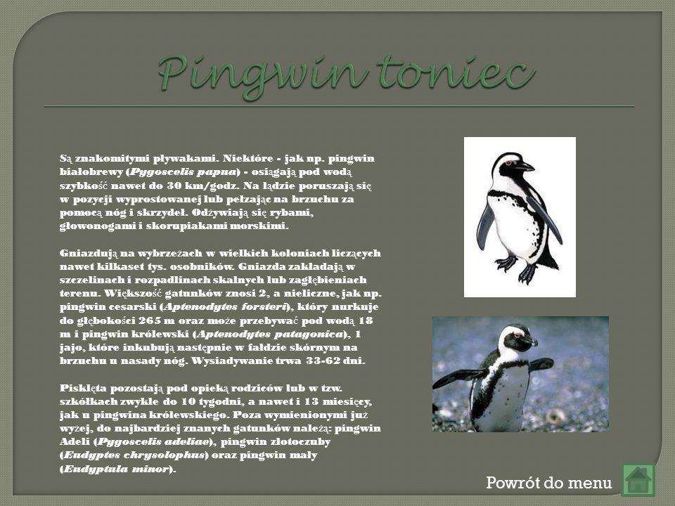 Pingwin toniec Powrót do menu